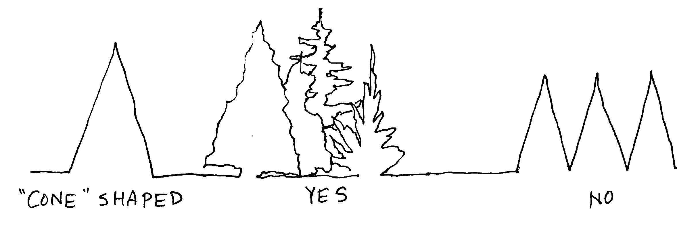trees-cone